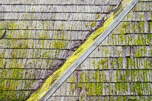 Are-You-Confusing-Roof-Mold-with-Algae-in-Irving-TX
